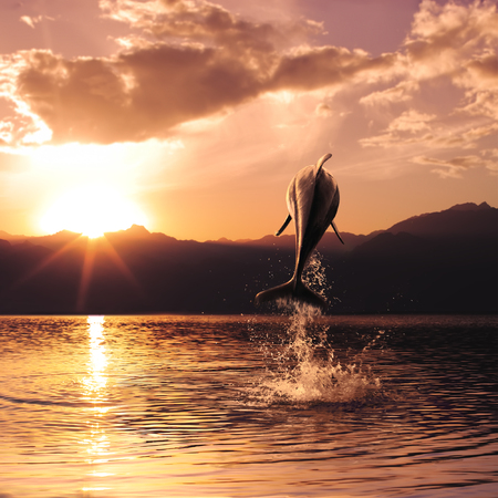 beautiful dolphin jumped from watrer at the sunset time