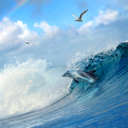 ocean-view playful dolphin leaping out from breaking ocean wave and seaguls flying on cloudy sky Foto de archivo