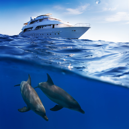 bottlenose: Underwater splitted by waterline template. Two bottlenose dolphins swimming under boat