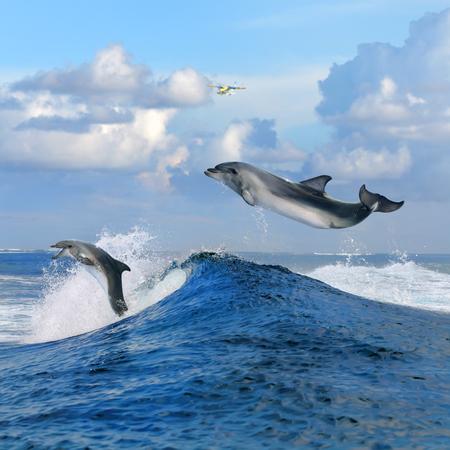 adentro y afuera: hermoso paisaje marino nublado durante el día y dos delfines saltando feliz a cabo desde el azul ola rompiente de surf rizado Foto de archivo