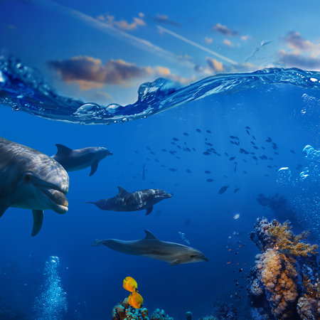 Oceanview. A pod of playful dolphins swimming underwater over coral reef background hunting to fish