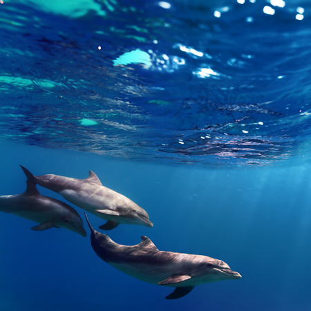 porpoise: A small Pod of dolphins playing in sunrays underwater Stock Photo