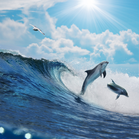 Two happy playful dolphins leaping from ocean breaking surfing wave to foam in front of cloudy seascape Archivio Fotografico