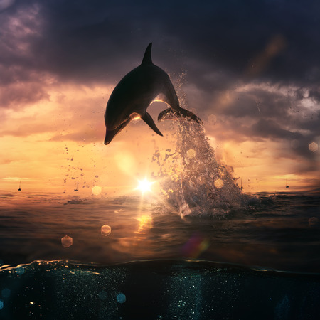 shorebreak: beautiful dolphin jumped from the ocean at the sunset time