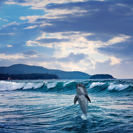 porpoise: beautiful funny dolphin jumping up from sea surface