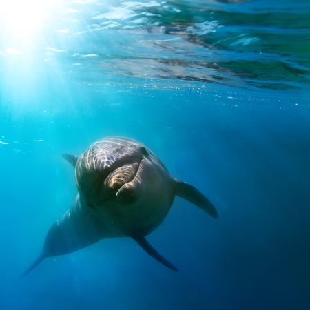 tropisch zeegezicht met wilde dolfijnen onderwater zwemmen sluit het zeeoppervlak tussen zonnestralen Stockfoto