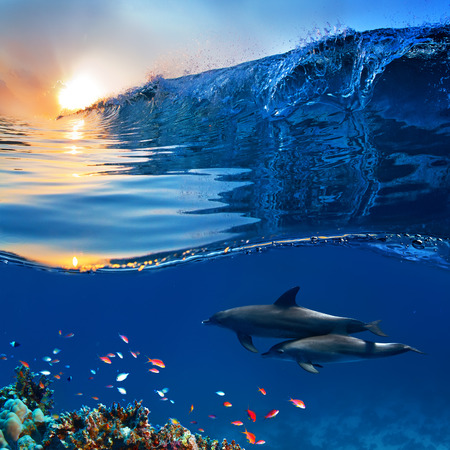 two beautiful dolphins swimming underwater through coral reef full of life with nice breaking wave Stock Photo