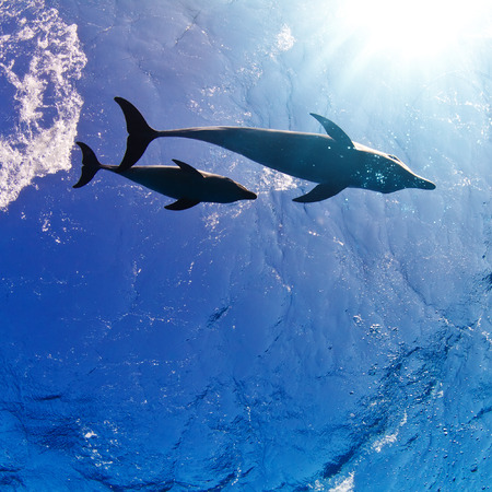 water surface with sunrays and two funny nice family dolphins underwater Stock Photo