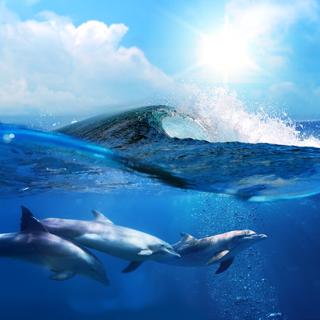 beautiful dolphins playing under ocean breaking surfing wave Stock Photo