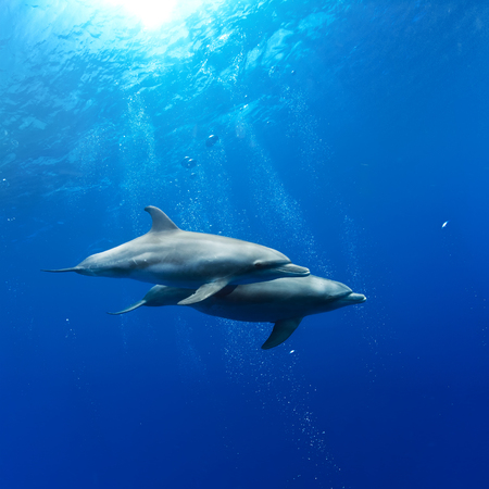 수중 sunrays에서 놀고있는 한 쌍의 돌고래