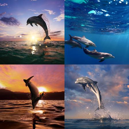 porpoise: beautiful wild dolphins set