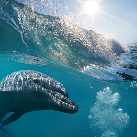 cetacean: A small flock of dolphins playing in sunrays underwater underneath of breaking wave