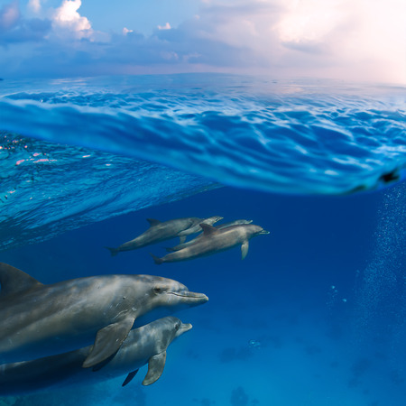porpoise: Submerged image splitted by waterline. A family of dolphins with a baby swimming underwater underneath of sea wave