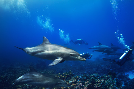 Shoal of dolphins swimming underwater over coral reef with group of divers
