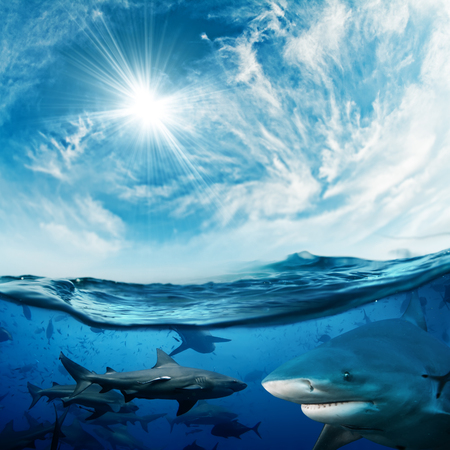 Beautiful cloudy divine background with sunlight and a lot of dangerous sharks underwater Standard-Bild