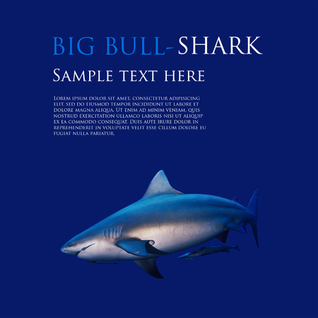 bull shark: big bull shark underwater on flat blue background template Stock Photo