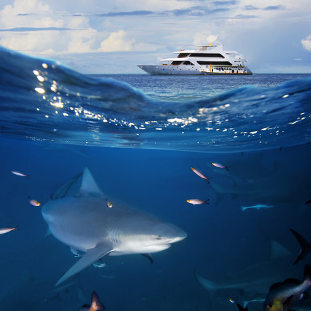 An underwater shot splitted two parts The Bottom One with wild big bull-shark surrounded by fish and shadowy silhouettes of other sharks in blue deep Top part is cloudy seascape with modern divers yacht Stock Photo