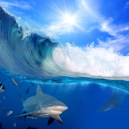 오션 뷰 두 부분을 splitted 먼저 파란색 수 중 몇 황소 상어와 함께 햇빛과 흐린 하늘 두 번째 깨는 서핑 웨이브