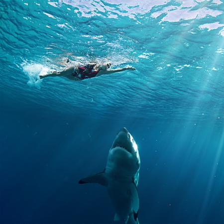 to fish: Gran ataque nadador del tiburón blanco