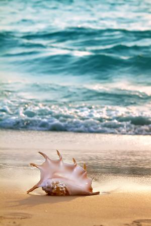 shorebreak: Tropical ocean paradise design template.Sandy beach with seashell near shorebreak Stock Photo