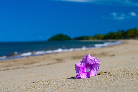 oceanscape: A Tropical Pacific ocean beach with pink flower on the sand Stock Photo