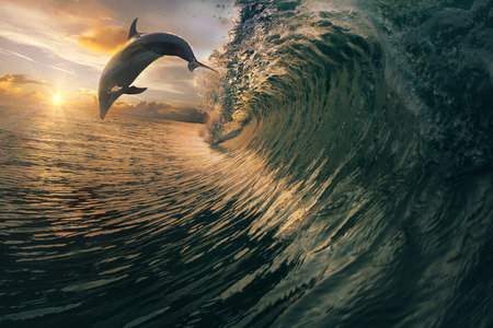 breaking wave: Big ocean breaking wave and sunset dolphin leaping. Stock Photo