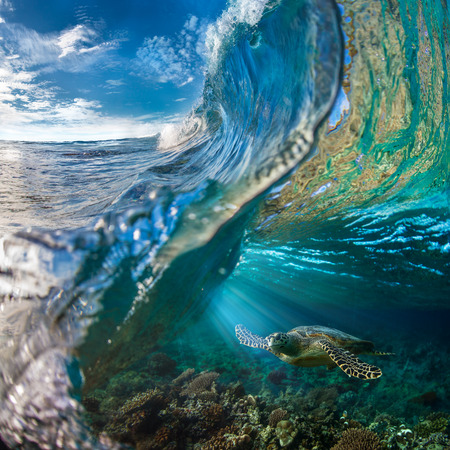 Big Ocean Wave Inside. Sea animal turtle floating underwater. Water surface with ripples on it. Beautiful Maldivian sky with clouds and Rays of Sun. Tropical design element. Standard-Bild