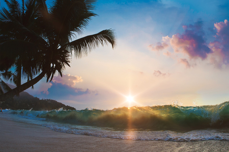 shorebreak: Tropical sandy beach with shorebreak line and coconut palm trees at the sunset time