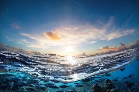 Puesta del sol tropical en el mar con hermosas nubes de colores y sol. Bajío de sardin azul en movimiento bajo el agua Foto de archivo