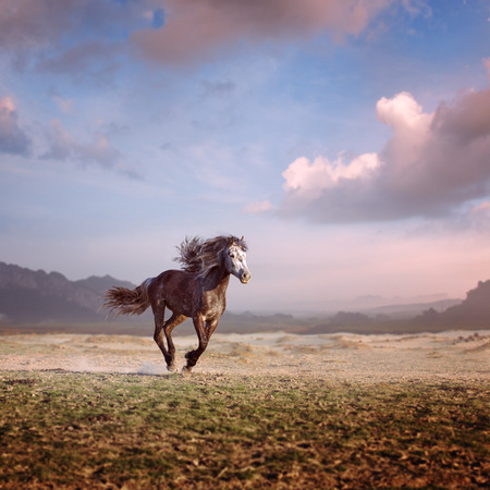 mane: Running horse with streamed mane in a beautiful valley at sunset time
