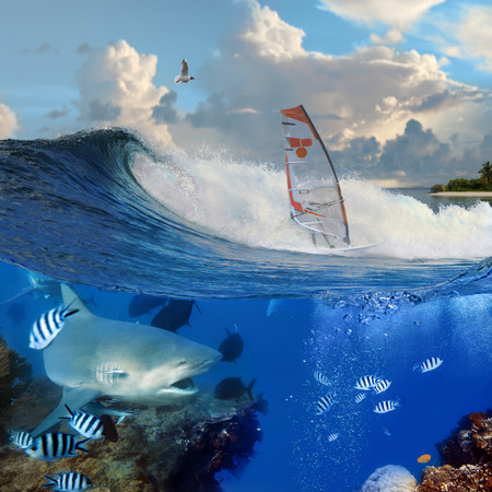 sail board: Separated image. Oceanview with breaking surfing wave and professional windsurfer on a board  under sail and angry hungry bull-shark swiming underwater over coral reef