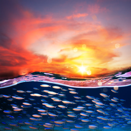 Tropical sunset at the sea with beautiful colorful clouds and sun. Shoal of blue sardin moving underwater