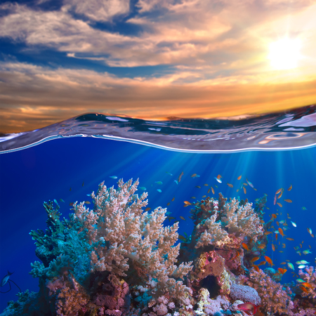 A beautiful tropical  coral reef with fish at sunset time