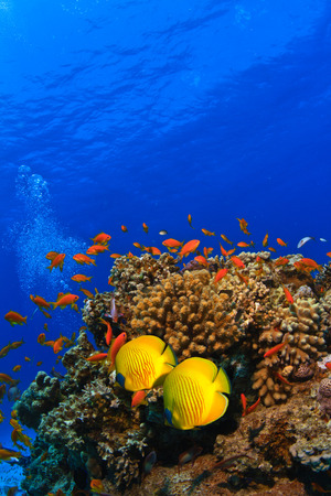 tropical underwater template beautiful coral reef full of different color fishes