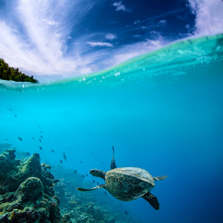 waterline: Sea turtle loggerhead floating over corals in tropical paradise. Cloudscape splitted by waterline Stock Photo