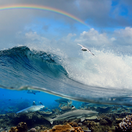 nice seascape with cloudy sky and rainbow with surfing ocean wave swirl white seagull flying above and four reef sharks underwater over corals
