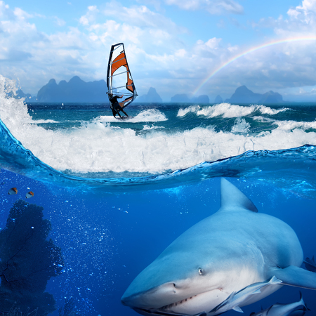 sail board: Separated image. Story about ocean and windsurfer on a board  under sail and angry hungry bull-shark swiming underwater Stock Photo