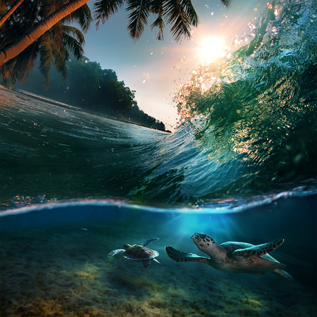 Tropical paradise template with sunlight. Ocean surfing wave breaking and two big green turtles diving underwater