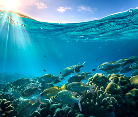 Tropical ocean life. Coral reef full of fish floating under water surface. Sunbeams light through ripples. Beautiful design postcard on blue marine background.