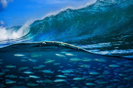 Tropical fish under ocean wave in sea water