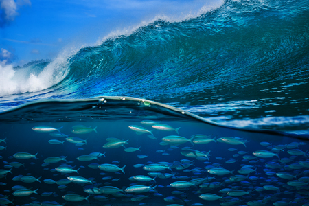 Tropical fish under ocean wave in sea water Stock Photo - 94102065