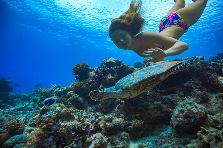 Caucasian girl underwater swimming with turtle over corals