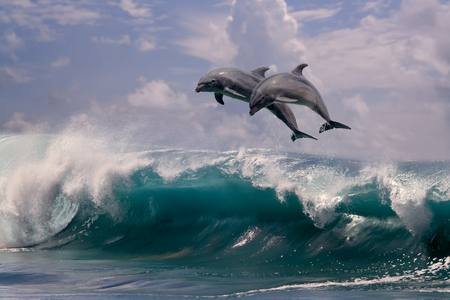 Two dolphins jumping from sea water over ocean wave Stock Photo