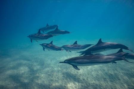 Delfines salvajes bajo el agua en el océano azul profundo Foto de archivo - 94102762