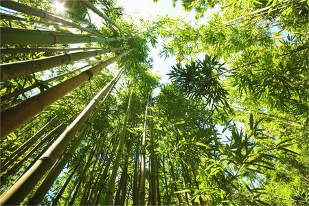 Bamboo forest upside view