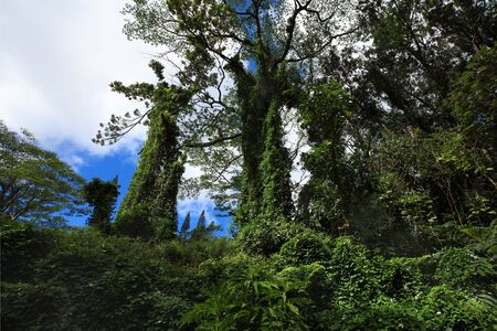 Tropical Green forest with lush on the trees Archivio Fotografico