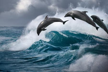 Delfines saltando desde el océano asaltando agua. Olas del mar con animales marinos saltando Foto de archivo