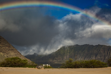 Beautiful valley lit with sunlight after rain and a rainbow on background. Monk-seal slipping on a sand on public beach in Hawaii