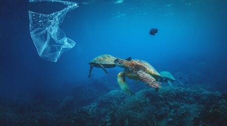 Underwater background animal sea turtles with floating plastic bag in ocean, Water Environmental Pollution Problem