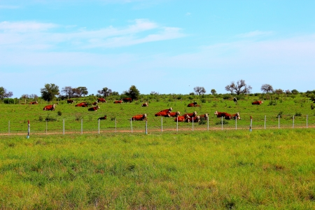 cattle wires: resting rodeo Stock Photo